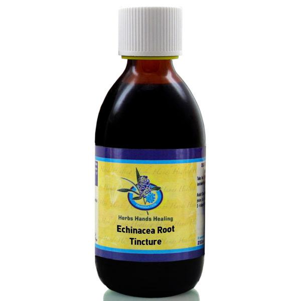 Echinacea Root Tincture 1100